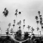 Palm Trees, Miami Beach Florida, 1987. USA South. copyright photographer Marilyn Bridges.