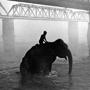Mahout Riding Elephant in Gandak River at Dawn, 1993. India. copyright photographer Marilyn Bridges